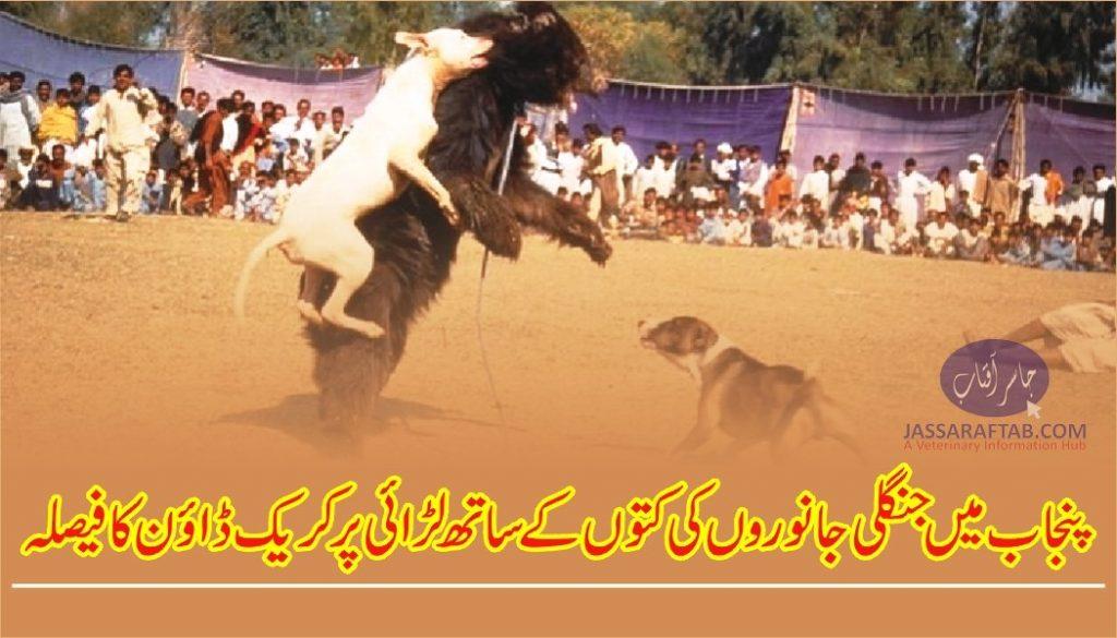 Crackdown on Dog Fighting