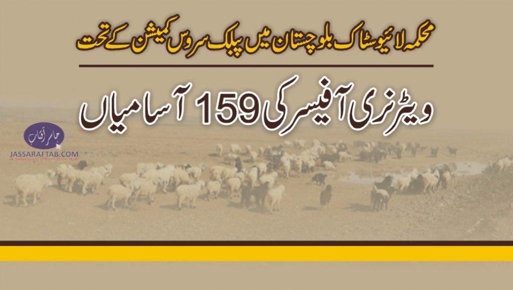DVM Balochistan jobs