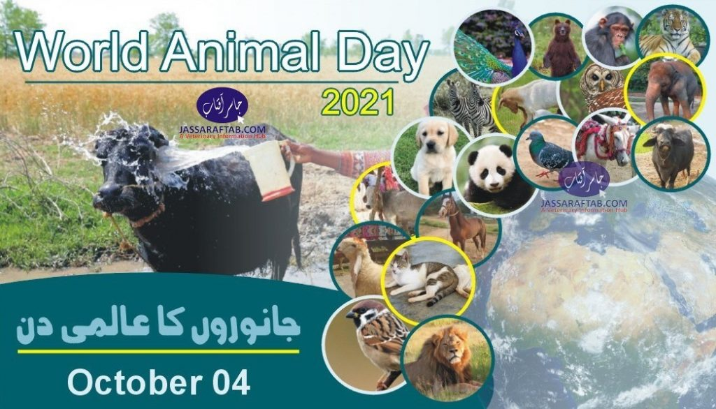 World Animal Day 2021